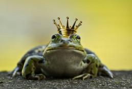 contenido de calidad, rana con corona